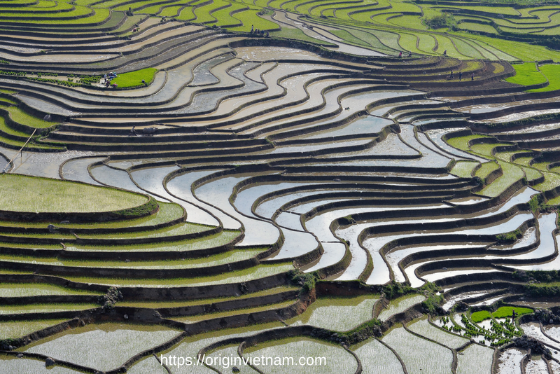 Stunning view of Sapa - Terrace rice field