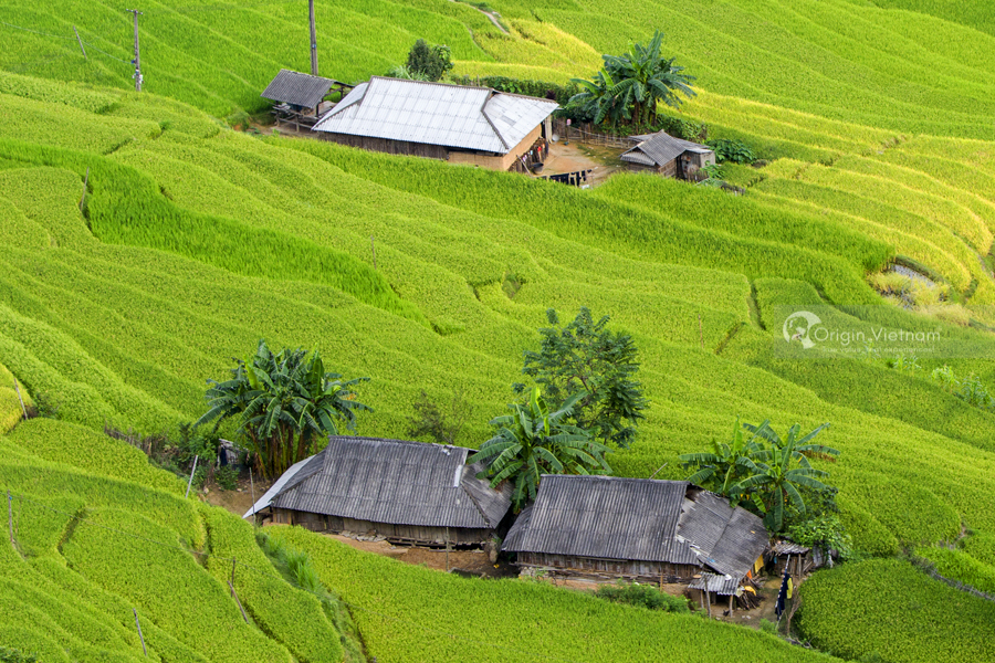Scenic beauty of the terraces rice fields