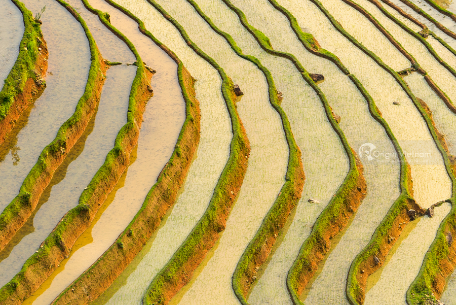 Water that makes terraced fields in Hoang Su Phi