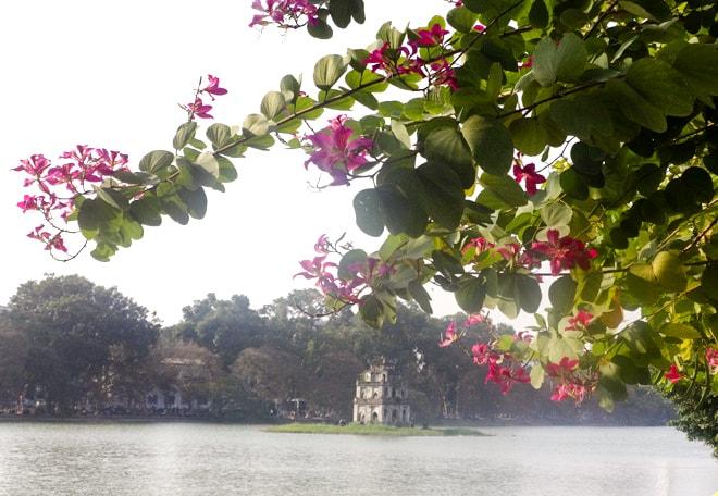 Ban Flower Hanoi