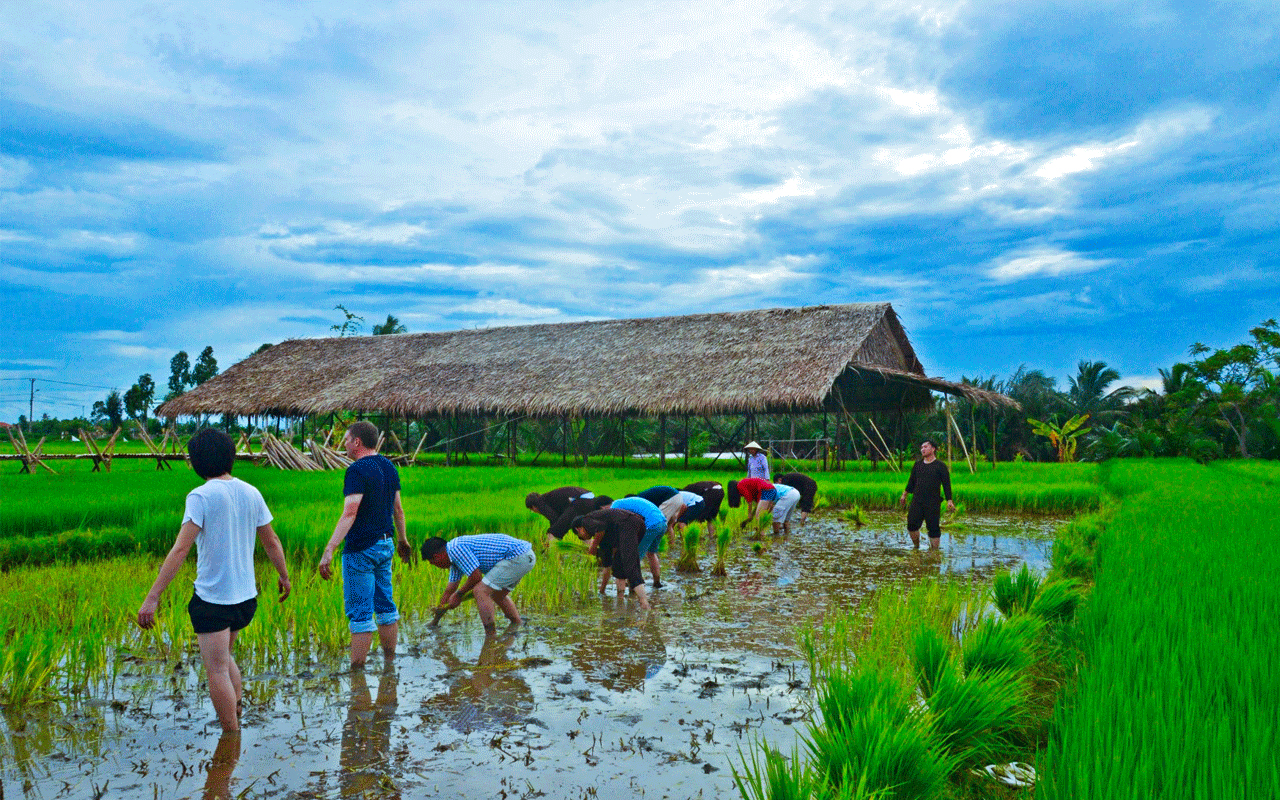 Be a local farmer in Cam Thanh village