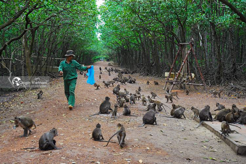 The monkeys in Can Gio Eco-tourism area, Ho Chi Minh