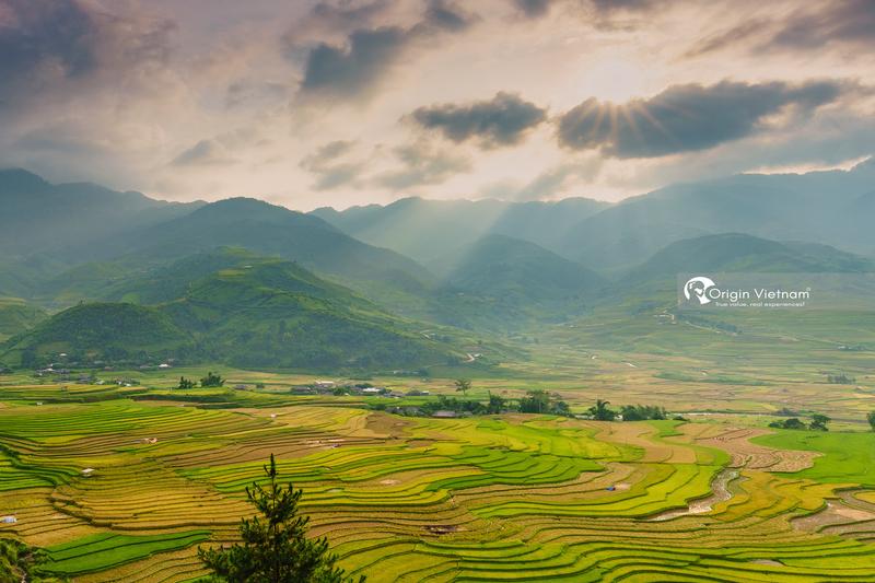 Rice in Mu Cang Chai