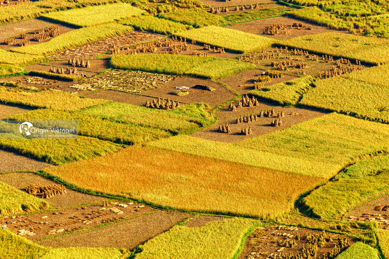 The rice fields at the foot of Ban Gioc Waterfall