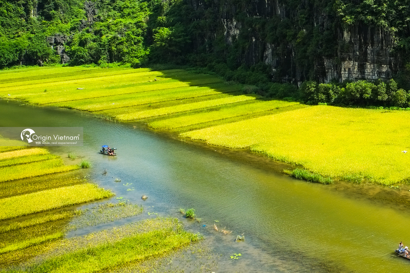 Admire the wonderful scenery of rice fields in Tam Coc from above