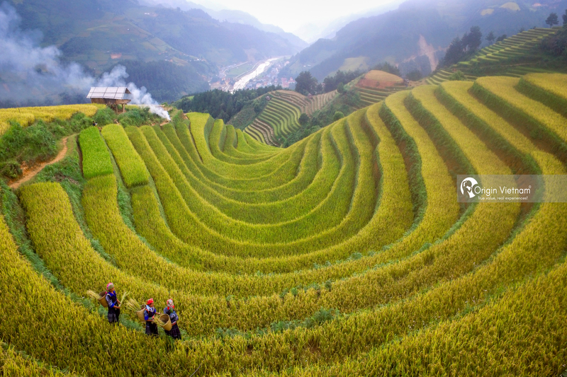The rice field in Mu Cang Chai