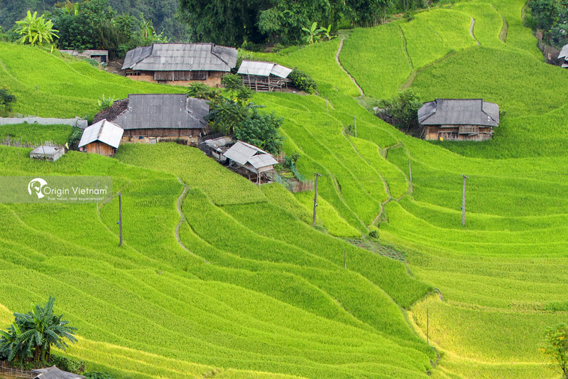 The rice field in Sapa