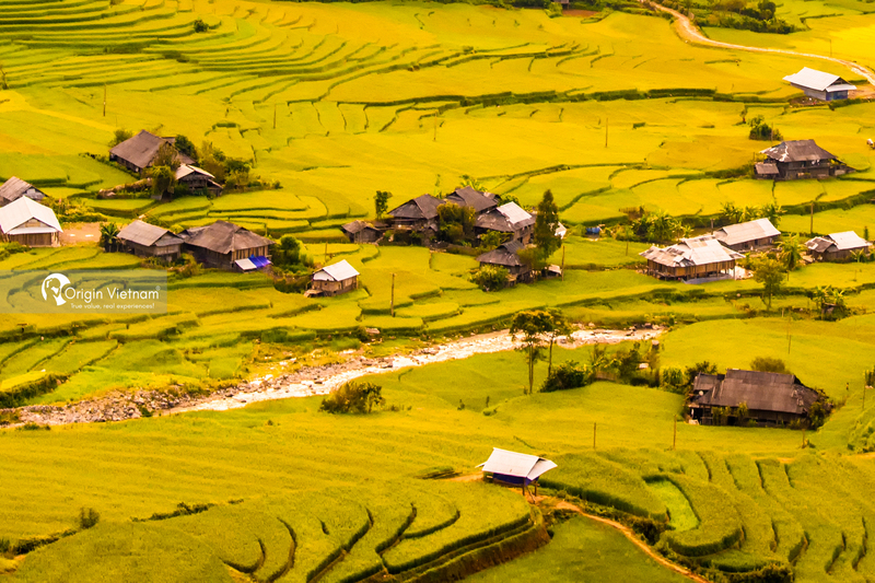 Exploring Mu Cang Chai rice season