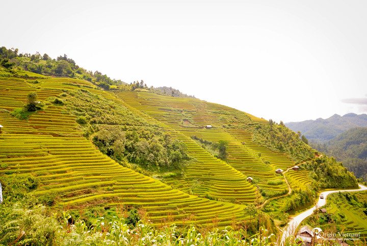 Terrace rice field in Mu Cang Chai