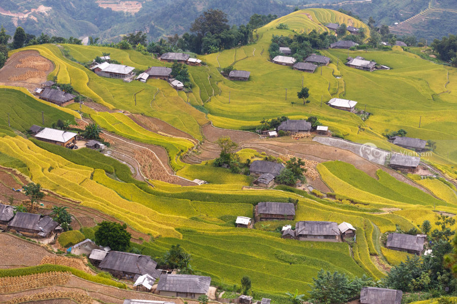 Terraced rice fields in Ha Giang Hoang su phi