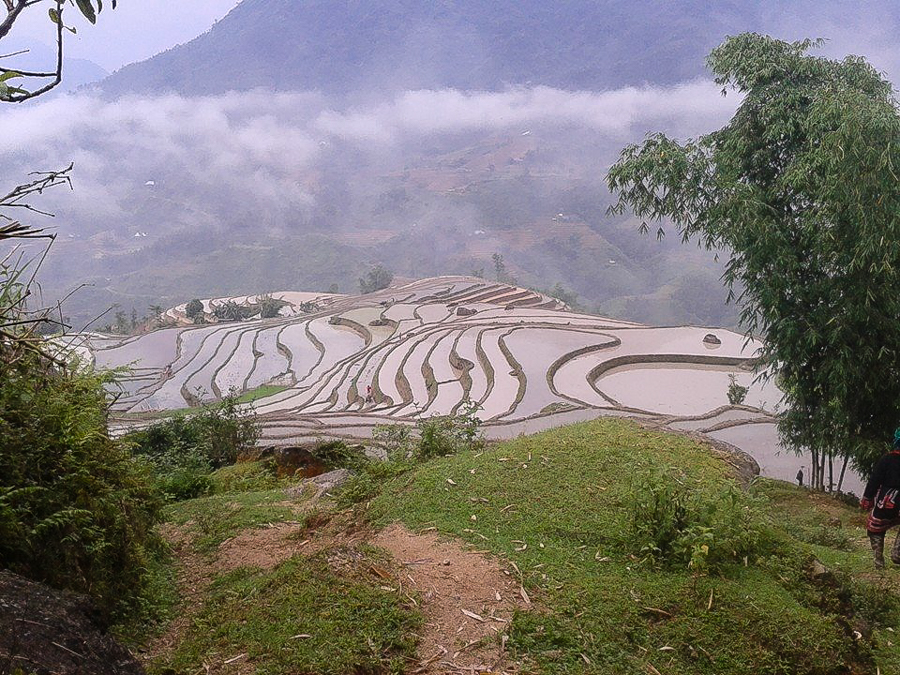 Terrace rice field Hoang Su Phi