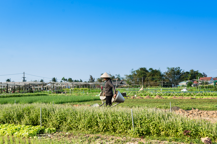 Farmer working on farm at Tra Que Herb Village