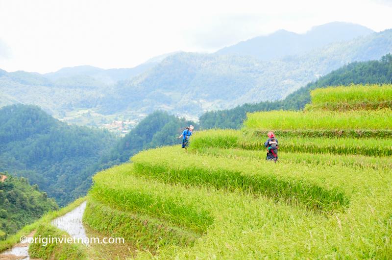 Mu cang chai rice terraces Vietnam