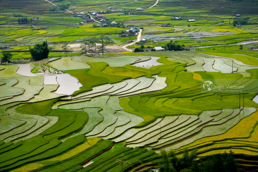 Golden terrace rice field Mu Cang Chai