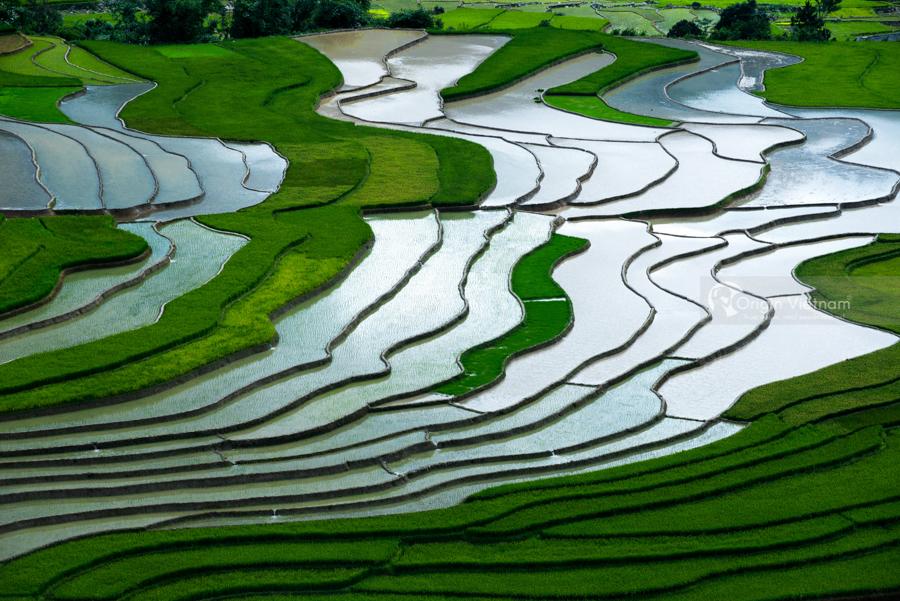 Green rice field my Cang Chai