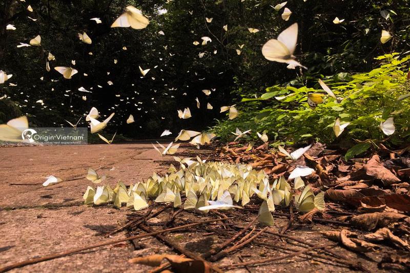 Butterflies in Cuc Phuong national park