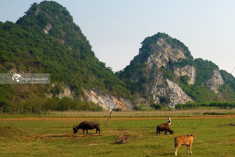 Bong Lai valley, ORIGIN VIETNAM