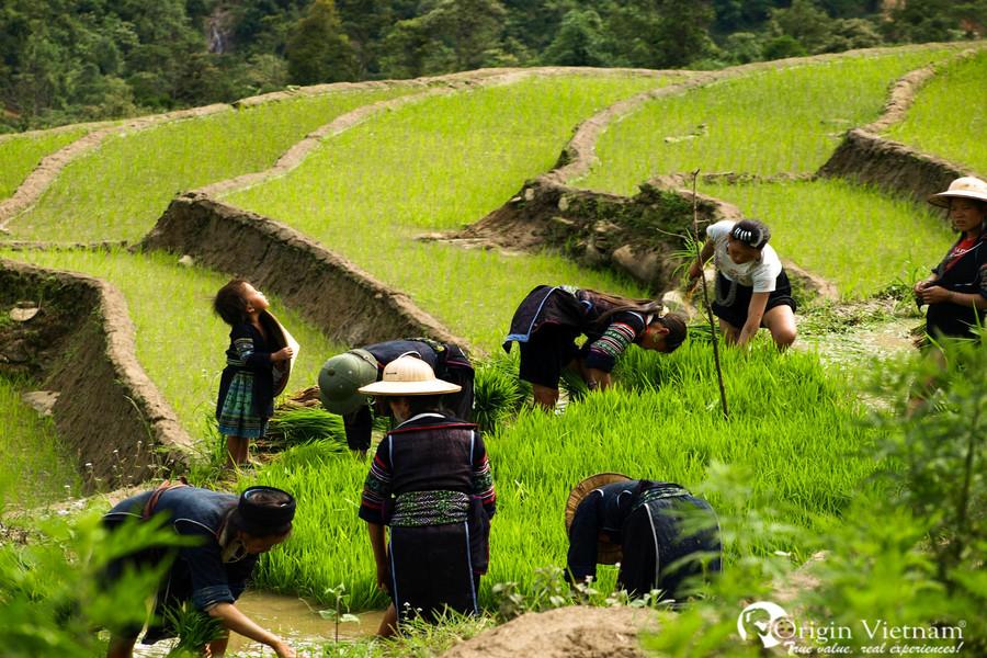 Rice terrace field in Y Linh Ho village